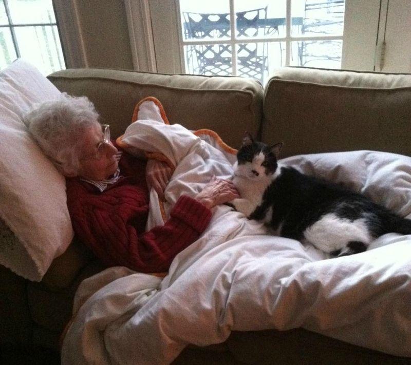 CatsGoldenHearts11 Почему мы любим кошек