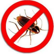 Одолеем прусаков! Безопасные способы борьбы с тараканами