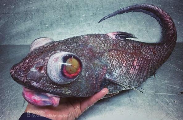 Моряк из Мурманска показал рыбу-«Чужого»