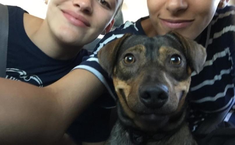 Собака благодарно новым хозяевам за любовь и заботу.