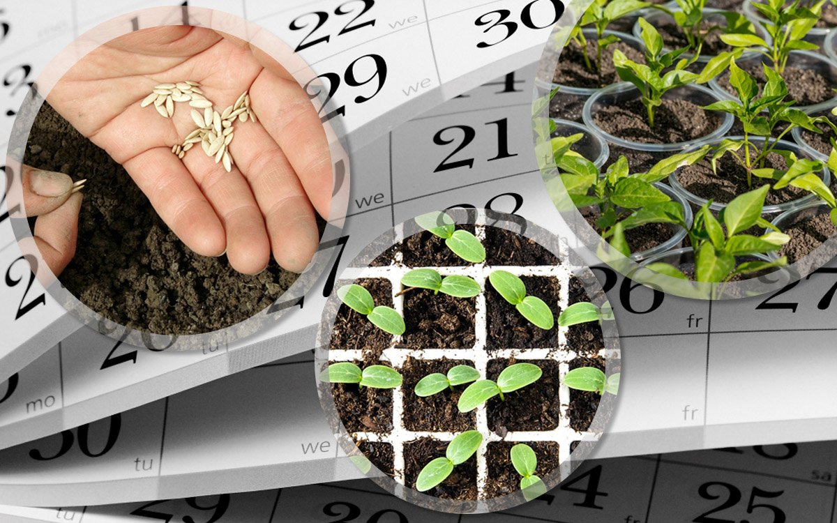 Что посеять в марте на рассаду