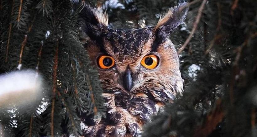 Фотограф доказал, что сказочные леса — обычное дело в Финляндии