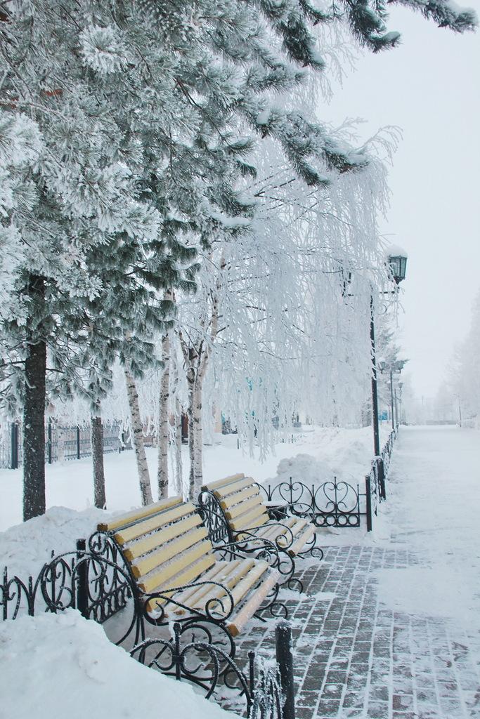 В парке старая скамейка впала в дрёму зимних дней...