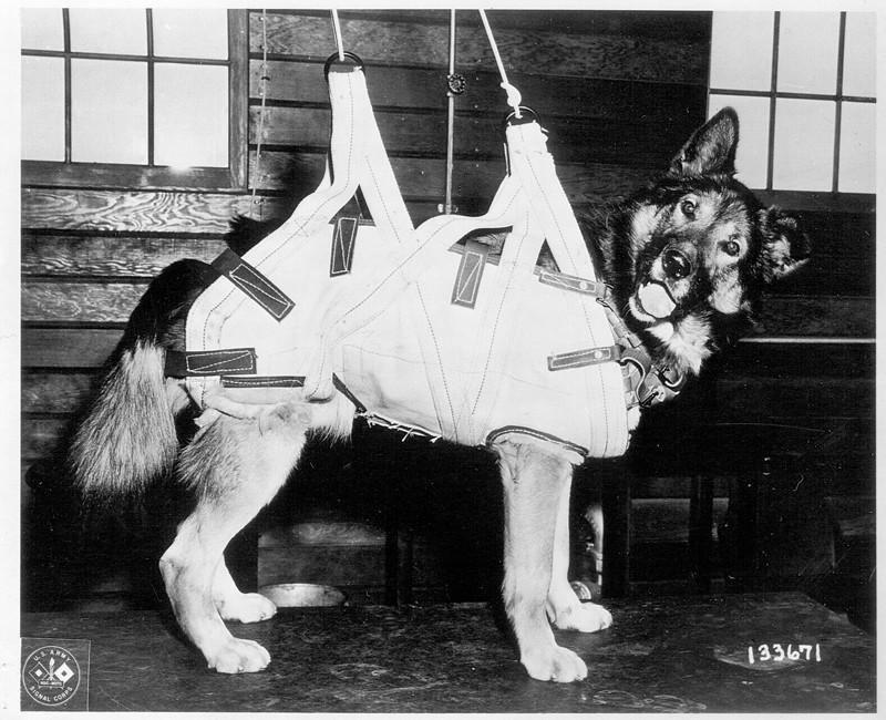 Собаки-парашютисты Второй мировой войны