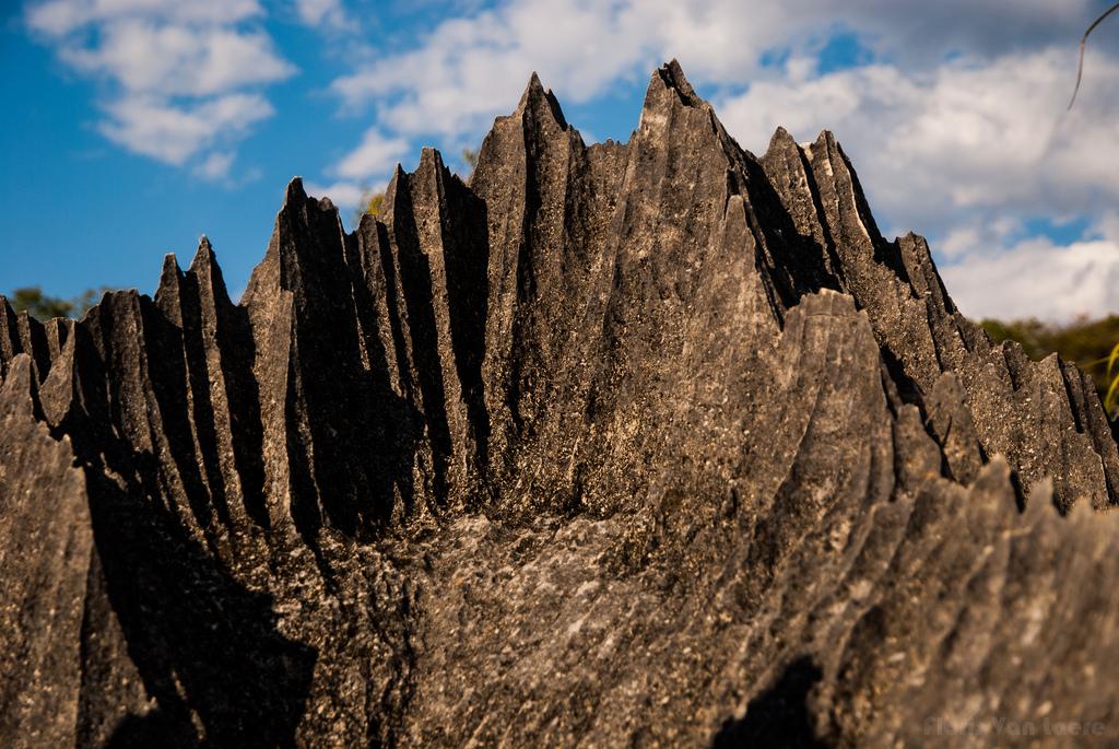 7977248095 d59d416cc5 b Каменный лес на Мадагаскаре