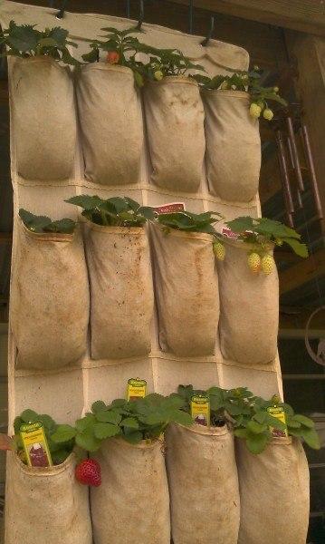 Готовые мешки для выращивания клубники 10