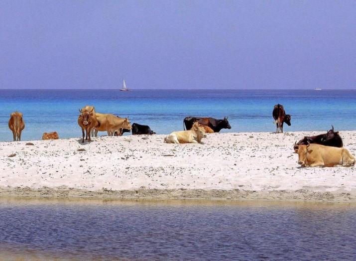 Пляж Салессия, Корсика