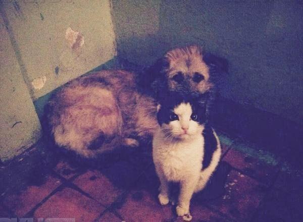Бездомная кошка взяла шефство над собакой