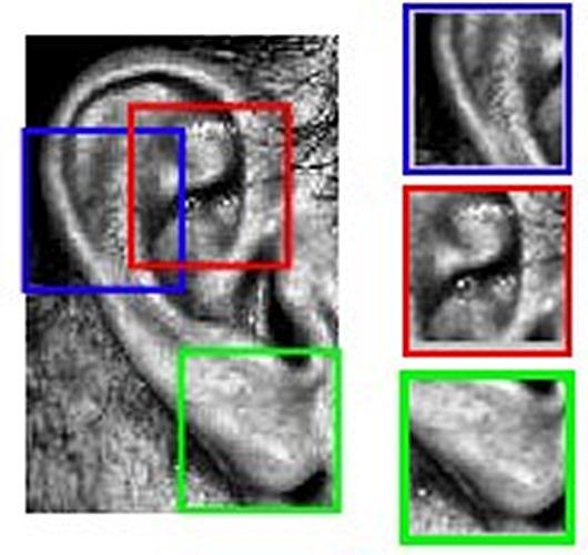 О чем могут рассказать наши уши это интересно, наука