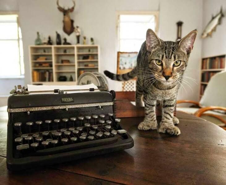 Hemingway-Cat