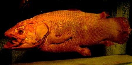 10 Самых странных предметов, найденных на дне океана
