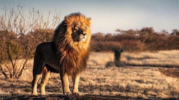 200 000 лет назад по Кении бродили львы ростом с людей Палеонтологи, кения, наука, находки, открытия, палеонтология, пещерный лев, ученые