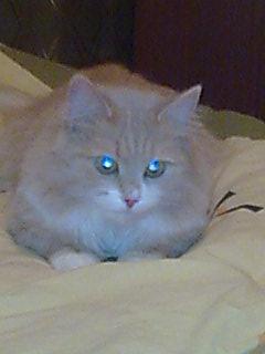 кошка Алиска