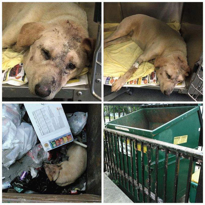 Эта собака была брошена в мусорный контейнер и оставлена умирать…