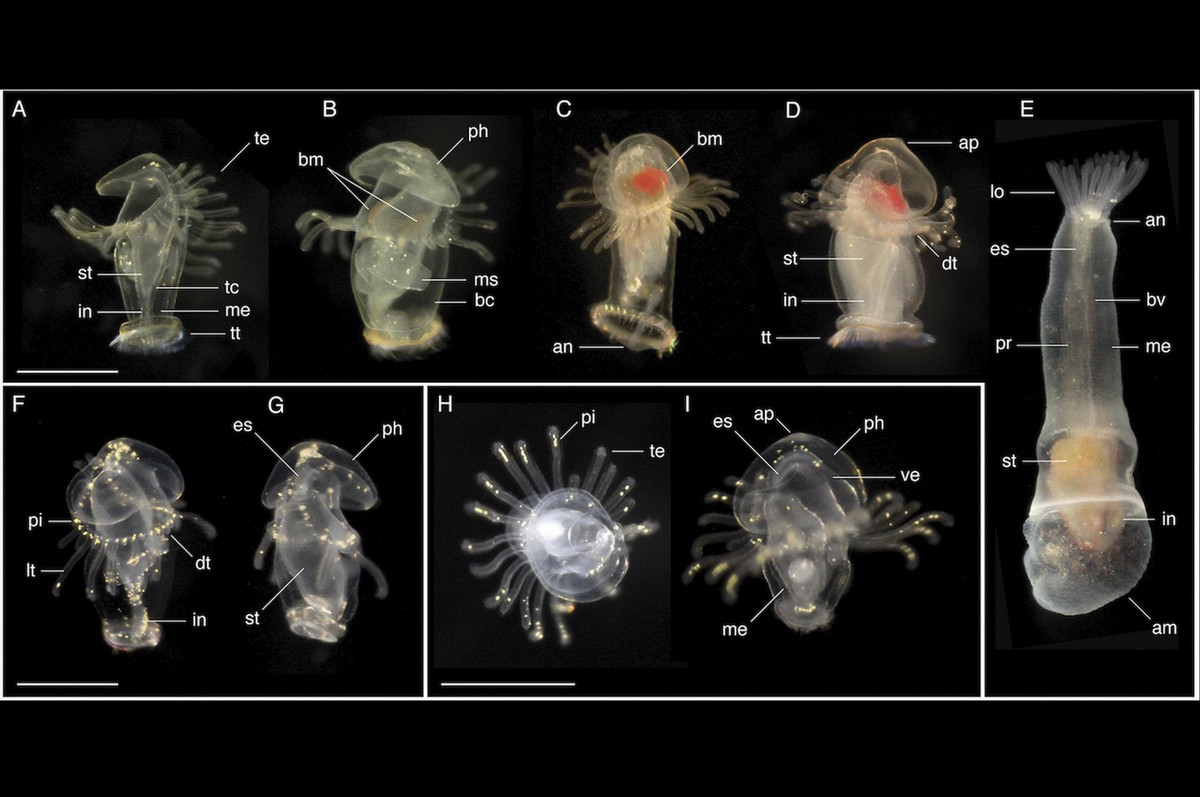 Найденные личинки глубоководных тварей поставили ученых в тупик