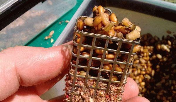 Подготовка пшеницы для рыбалки. Различные способы
