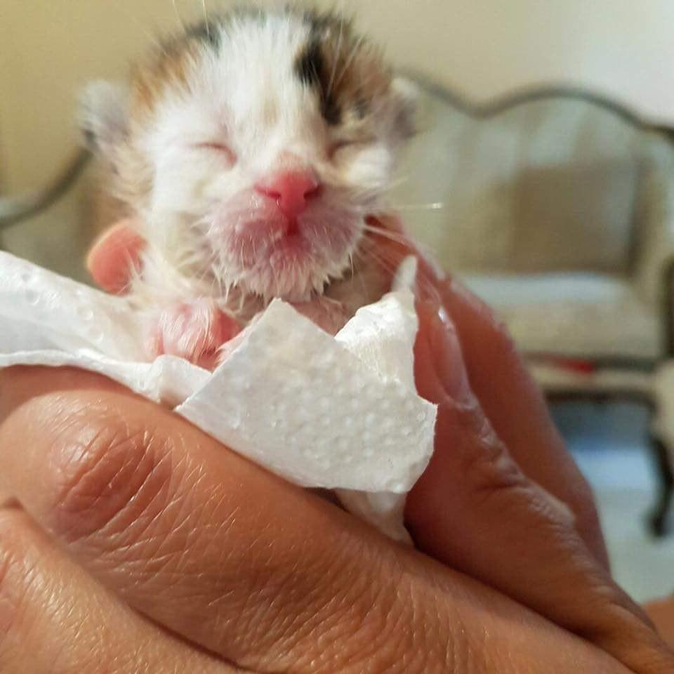 «Я принесу тебе счастье!» Слепой разноцветный котёнок, спасенный из отходов, оказался редким бриллиантом