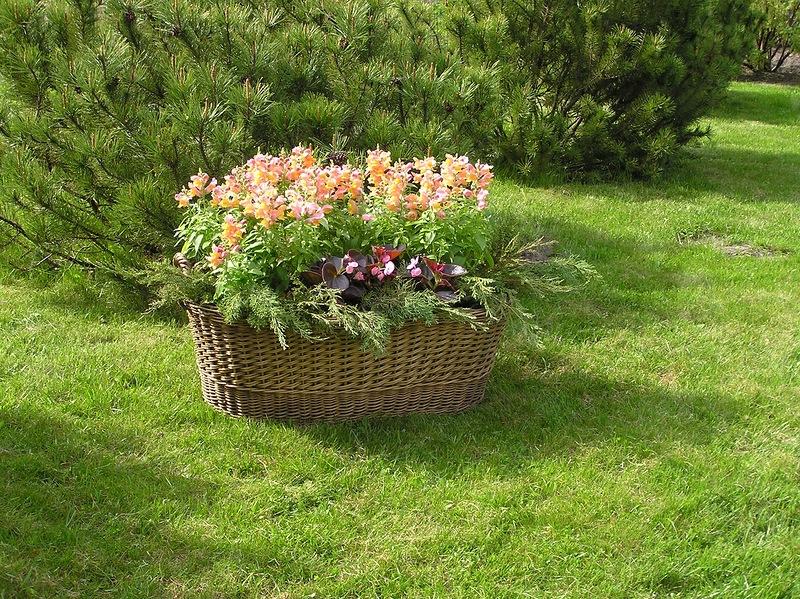 """Уютный сад """" Очаровательный способ украсить лужайку - корзина цветов"""