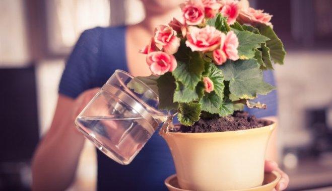 Как правильно выбрать воду для полива комнатных растений