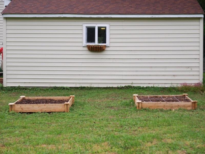 мужчина закапывает обычное яйцо в почву. Результат — настоящее открытие для всех садоводов!