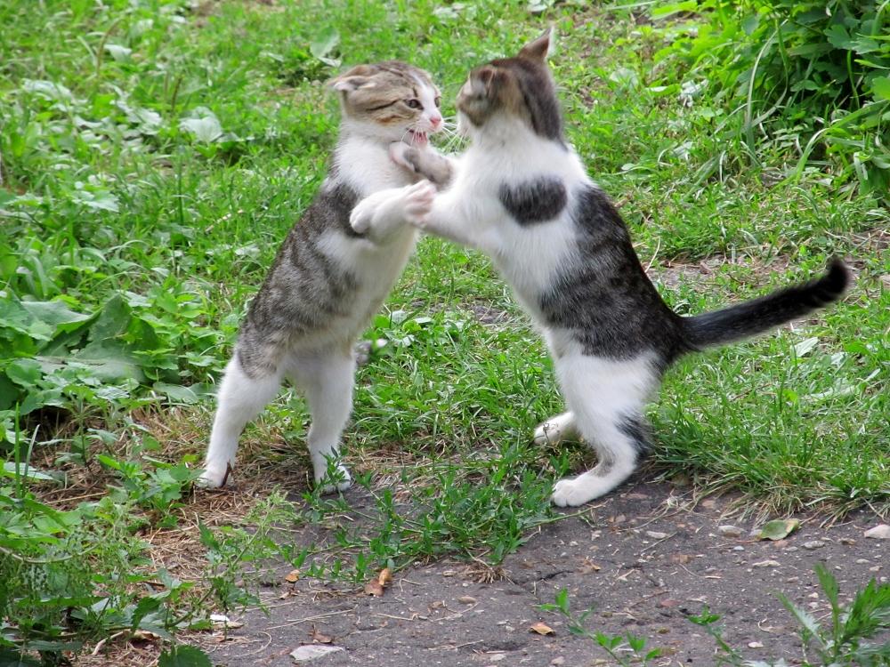 Танго для двоих