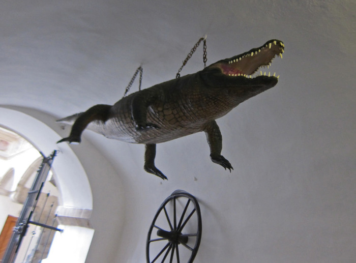 Дракон из Брно, подвешенный в здании ратуши. | Фото: atlasobscura.com.