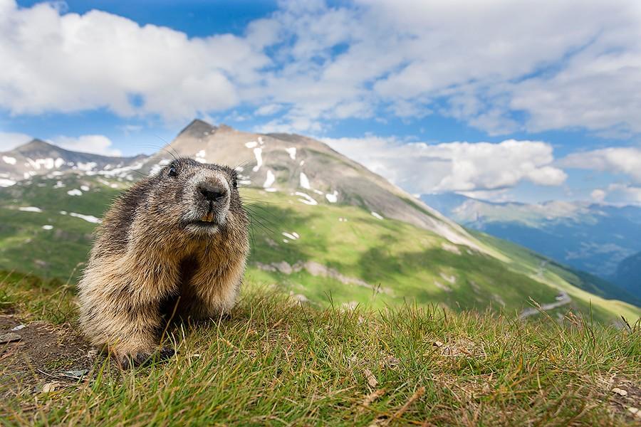 GDT02 Итоги крупнейшего европейского конкурса фотографии дикой природы GDT 2013