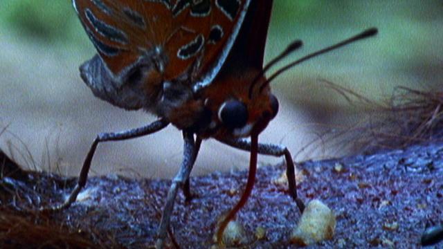 9 видов животных, очень любящих кровь