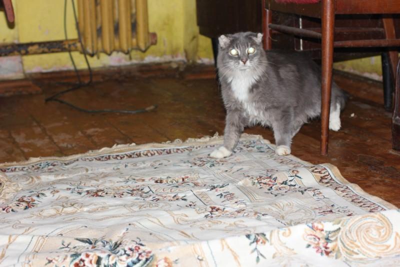 Челябинские волонтеры приютили 19 кошек, которые остались в квартире после кончины старушки-хозяйки