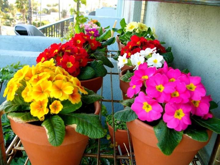Сад на балконе: как декорировать стены и какие растения выбрать