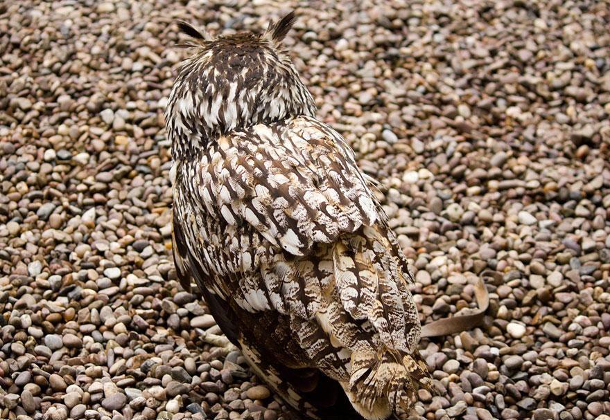 Camouflage19 Животные   мастера маскировки