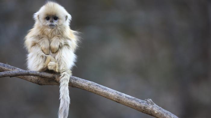 Помощь в приемке квартиры: не думайте о белой обезьяне