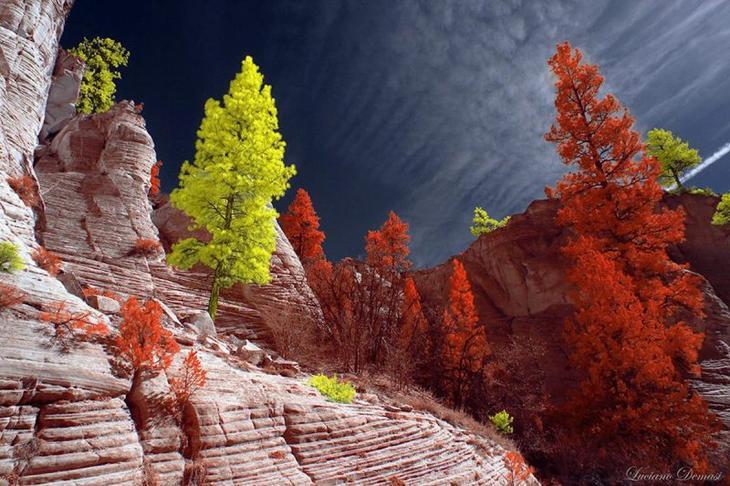Лучшие работы с нового конкурса инфракрасной фотографии Life in Another Light