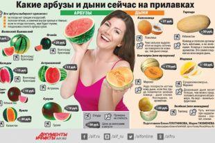 Какие арбузы и дыни сейчас на прилавках? Инфографика