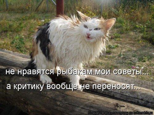 Новая смешная котоматрица (38 шт)