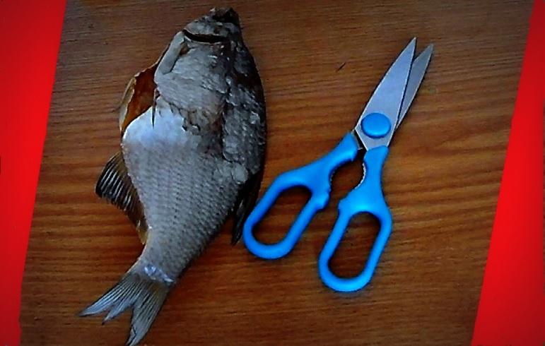 сушка рыбы на рыбалке