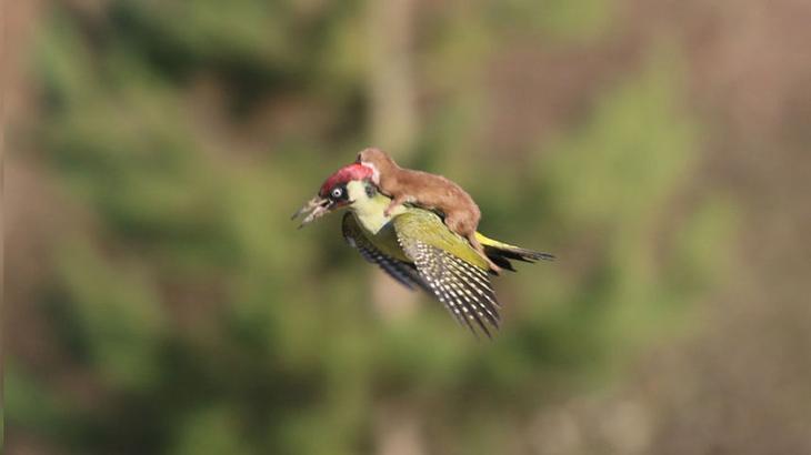 Самые смешные снимки Comedy Wildlife Photography Awards