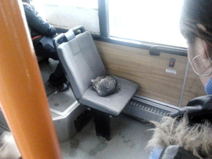 По мнению Novate.ru, это самый очаровательный пользователь общественного транспорта.  | Фото: Приколисты.