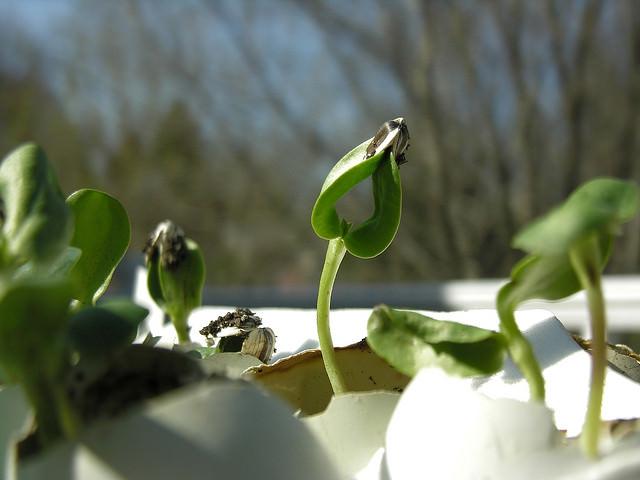 Методы удобрения растений