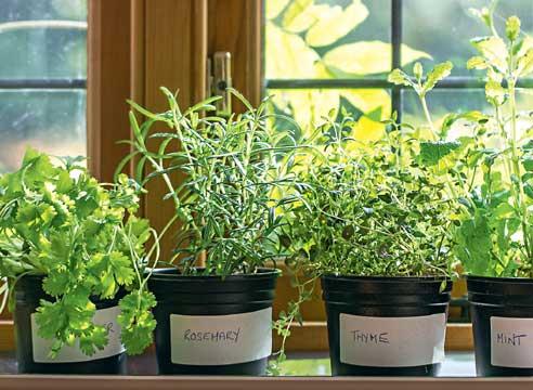Зелень: что можно вырастить на подоконнике
