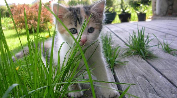 Котик и собачка на даче: плюсы и минусы.