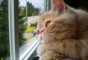 Когда коту скучно (видео)