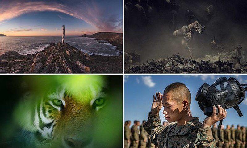 Какая из этих фотографий станет лучшей? Работы с фотоконкурса Smithsonian Photo Contest 2018