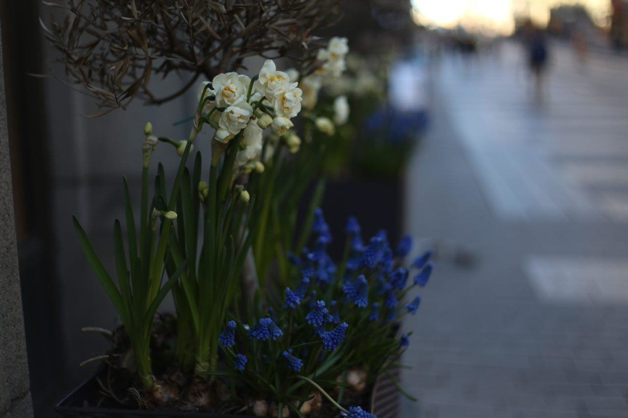 В Петербурге посадят 7 миллионов цветов в 2019 году