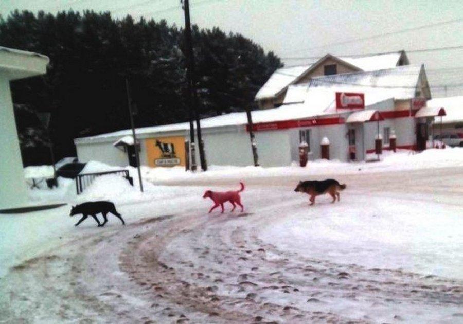 Как спасали розовую собаку