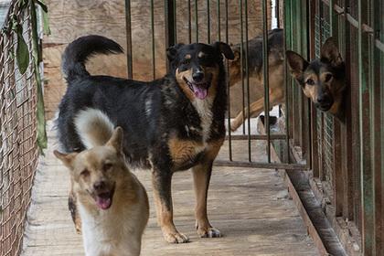 Госдума поддержала ужесточение наказания за издевательства над животными