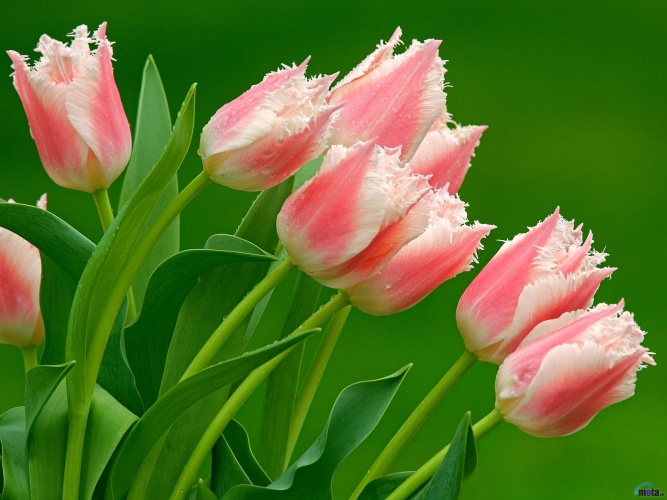 Цветок с бурным прошлым