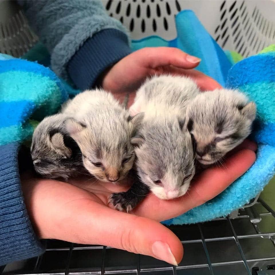 Уличная кошка родила котят и оказалась на передержке… Но внезапно ей стало плохо