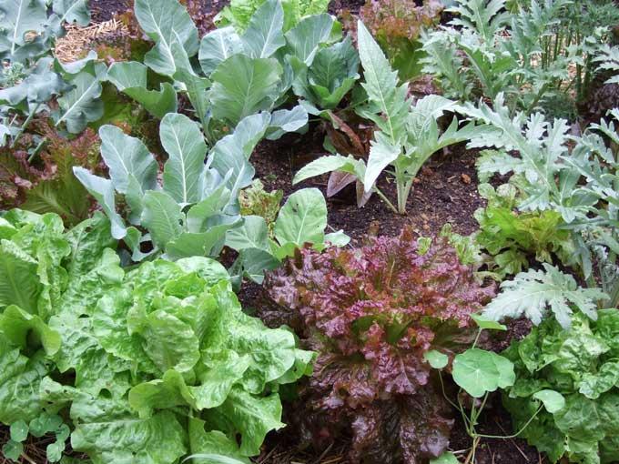 Совместимость растений на грядках