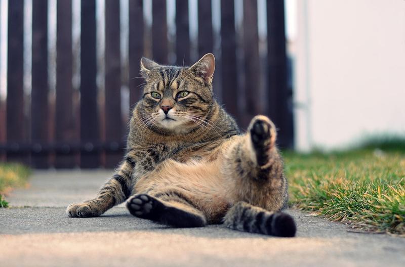 Котики от фотографа Дэвида Хароуза